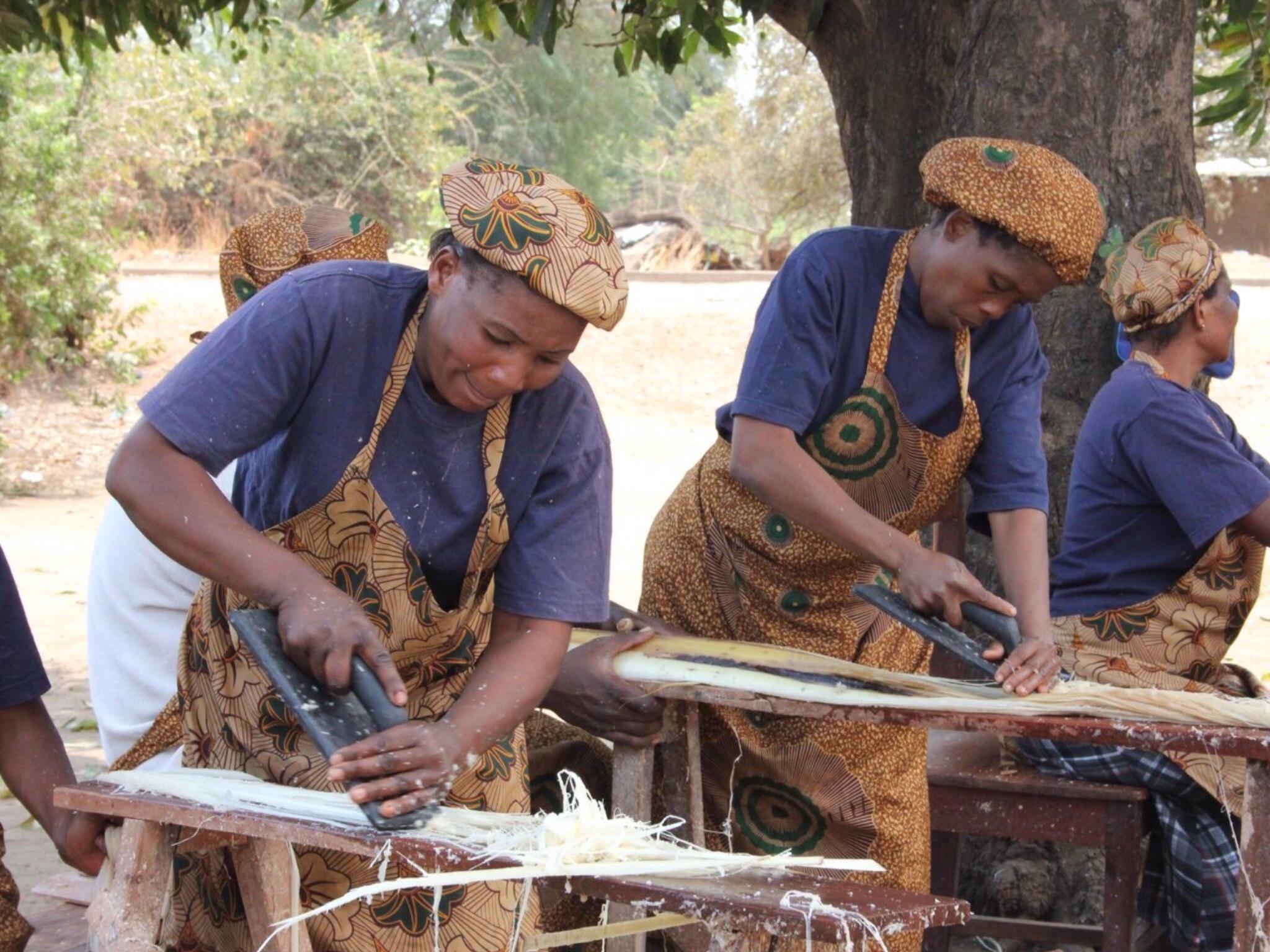 バナナの茎から水分を絞り出す作業
