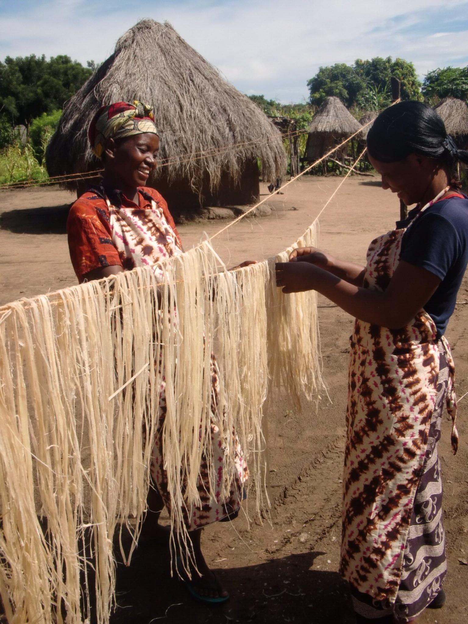 バナナ繊維を乾燥する作業